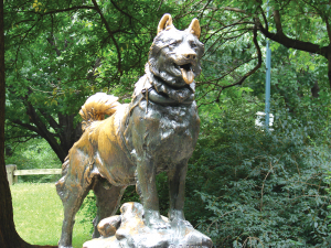 The statue of Balto, the sled dog who saved Alaska's children from a diphtheria epidemic and inspired the yearly Iditarod Race.