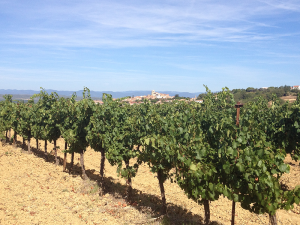A walk through the vineyards in August, just before harvest, with our village, Corneilhan, from its vantage point on a hill.