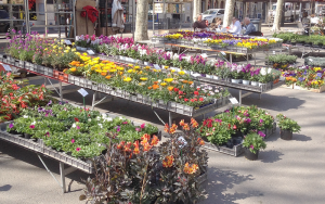 Every Friday - winter or summer, rain or shine - there is a flower market in the heart of Beziers.