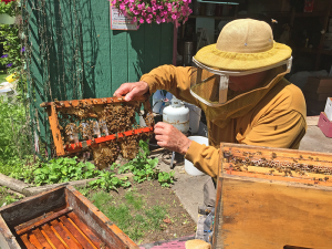 Jim Howard showcases a group of queen bees he has at his Hives of Howard in Oswego. Each box (or hive) can produce up to 200 pounds of honey.