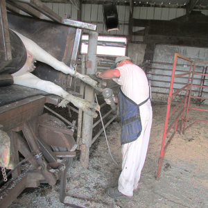 Dave Huxtable, a former dairy farmer, applies a small, handheld, electric angle grinder to the hooves of the cow while she is encased painlessly in a chute that rotates her onto her side.