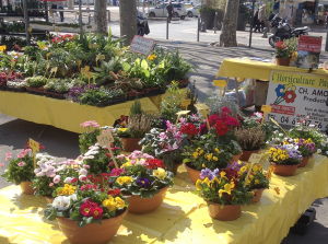 These bright blooms were for sale in our outdoor flower market in late winter.