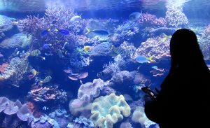 A 500,000 gallon aquarium in downtown Houston.