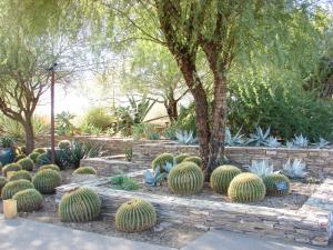 Desert Botanical Garden in Phoenix.