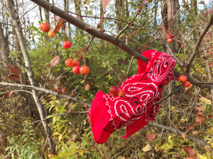 A bandana lost on a crabapple tree in Lysander.