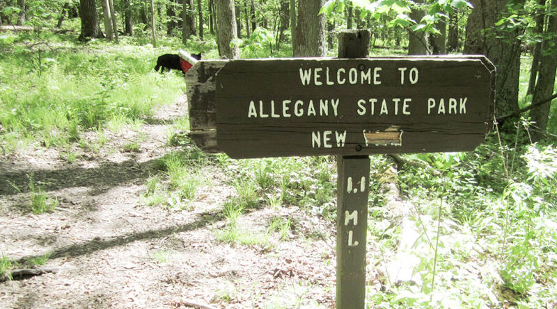 The Finger Lakes main trail starts just over the state line in Pennsylvania in Allegany State Park. It runs east for 575 miles to the Catskill Forest Preserve.
