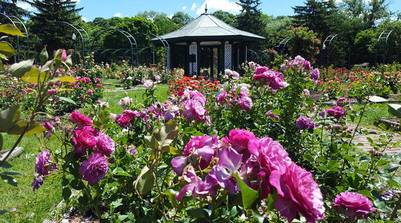 E.M. Mills Memorial Rose Garden. 1922.
