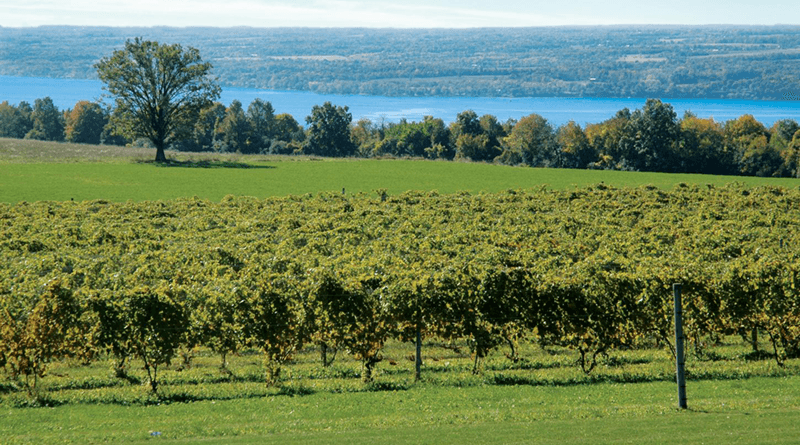 Cayuga County is part of the Finger Lakes Wine Trail.