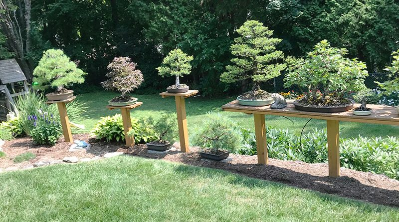 """Carl Hoffner has more than 100 bonsai trees in his home's backyeard. """"You start with one or two and, suddenly, you have 50 or more,"""" he said."""